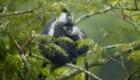 Nyungwe-National-Park-Rwanda-940x600