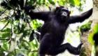 nyungwe-national-park-chimpanzee-tracking-rwanda