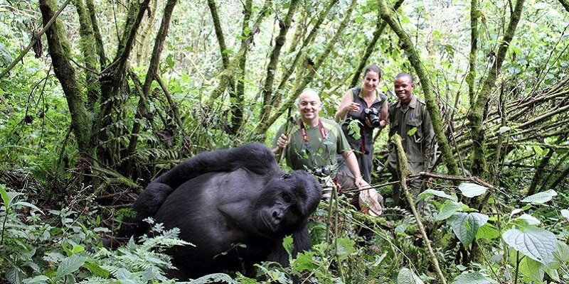 1 day gorilla trekking safari